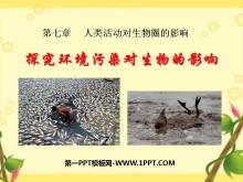 《探究环境污染对生物的影响》人类活动对生物圈的影响PPT课件