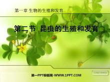 《昆虫的生殖和发育》生物的生殖和发育PPT课件4