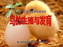 《鸟的生殖和发育》生物的生殖和发育PPT课件2
