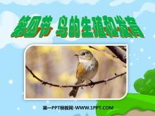 《鸟的生殖和发育》生物的生殖和发育PPT课件3
