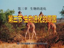 《生物进化的原因》生物的进化PPT课件4