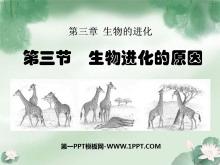 《生物进化的原因》生物的进化PPT课件5