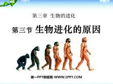 《生物进化的原因》生物的进化PPT课件6