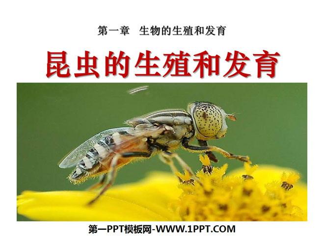 """《昆虫的生殖和发育》生物的生殖和发育PPT课件2 你知道美丽的蝴蝶是怎么来的吗? 是从小蝴蝶张大的吗? """"毛毛虫""""是怎样变成蝴蝶的呢? 其他还有哪些生物有这样奇怪的变化呢? 家蚕的生殖和发育 你听说过""""丝绸之路""""吧,""""丝绸""""其实是蚕的丝。 唐代诗人李商隐的诗中曾写道: """"春蚕到死丝方尽,蜡矩成灰泪始干。"""" 蚕吐完了丝就真的死了吗? ."""