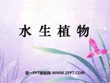 《水生植物》植物PPT课件