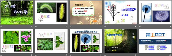 《大树和小草》植物ppt课件2