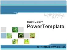 48张植物PPT模板打包下载