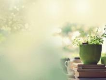 绿色花盆植物幻灯片背景图片