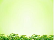 绿色桂花背景简洁PPT背景图片