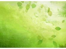 绿色透明叶子唯美m88.com图片