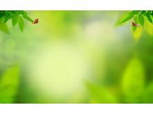 黄绿色调绿昆虫绿叶PPT背景图片