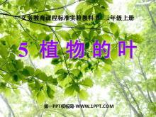 《植物的叶》植物PPT课件