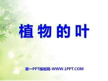 《植物的叶》植物PPT课件3