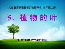 《植物的叶》植物PPT课件4