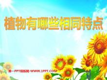 《植物有哪些相同点》植物PPT课件2