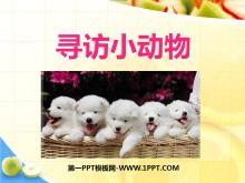 《寻访小动物》动物PPT课件2