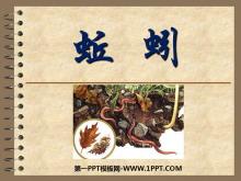 《蚯蚓》动物PPT课件2