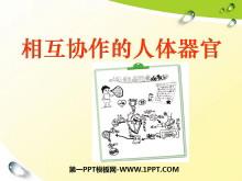 《相互协作的人体器官》我们的身体PPT课件3