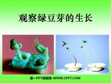 《观察绿豆芽的生长》生物与环境PPT课件2