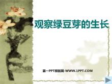 《观察绿豆芽的生长》生物与环境PPT课件3