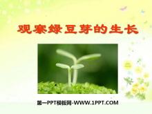 《观察绿豆芽的生长》生物与环境PPT课件4