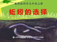 《蚯蚓的选择》生物与环境PPT课件2