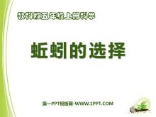 《蚯蚓的选择》生物与环境PPT课件4