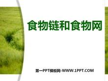 《食物链和食物网》生物与环境PPT课件2
