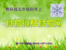 《食物链和食物网》生物与环境PPT课件3