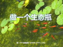 《做一个生态瓶》生物与环境PPT课件3