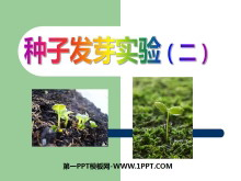 《种子发芽实验(二)》生物与环境PPT课件3