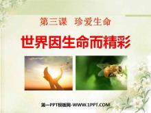 《世界因生命而精彩》珍爱生命PPT课件6