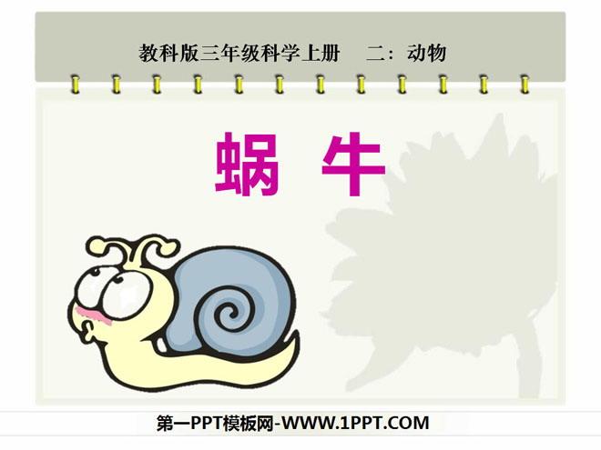 《蜗牛》动物ppt课件2