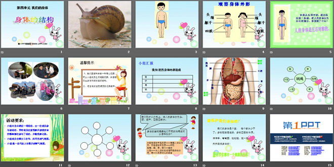 《身体的结构》我们的身体ppt课件4