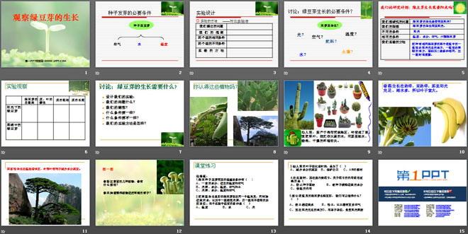 《观察绿豆芽的生长》生物与环境PPT课件