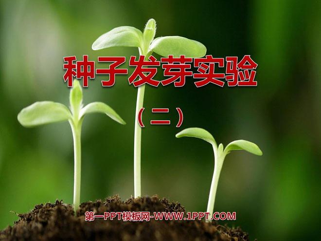 《种子发芽实验(二)》生物与环境PPT课件4