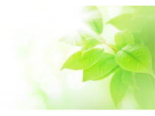 两张黄绿色漂亮树叶PPT背景图片