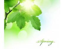 阳光枝叶植物PPT背景图片