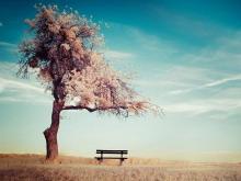 三张唯美蓝天白云大树PPT背景图片