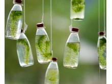 玻璃水杯瓶子绿苔植物PPT背景图片
