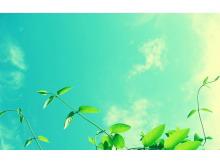 两张蓝天白云下唯美植物PPT背景图片