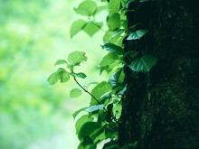 清新树干枝叶PPT背景图片