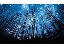 蓝色星空下幽深树林背影m88.com图片