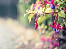 清新紫色花卉PPT背景图片