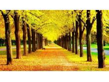 金黄色树木m88.com图片