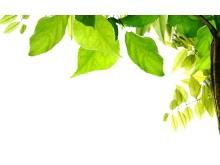 角落绿色叶子PPT背景图片