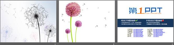 蒲公英抽象植物ppt背景图片
