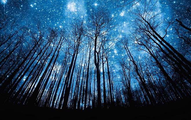 蓝色星空下幽深树林背影ppt背景图片