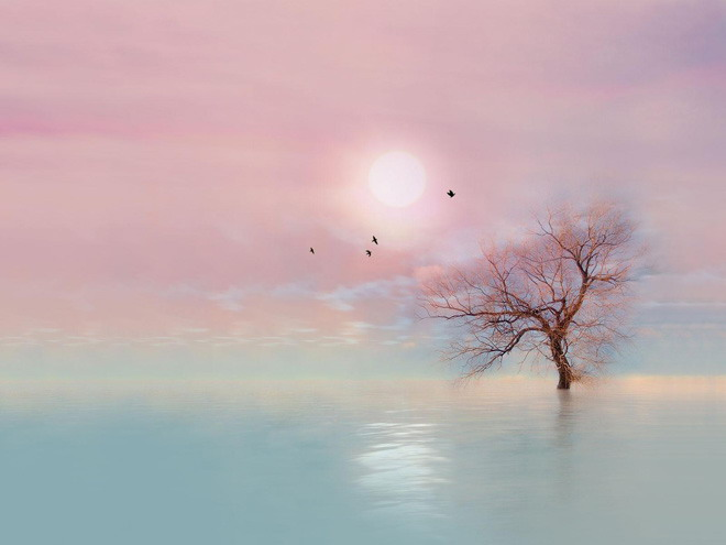 唯美蓝紫色调太阳树木ppt背景图片