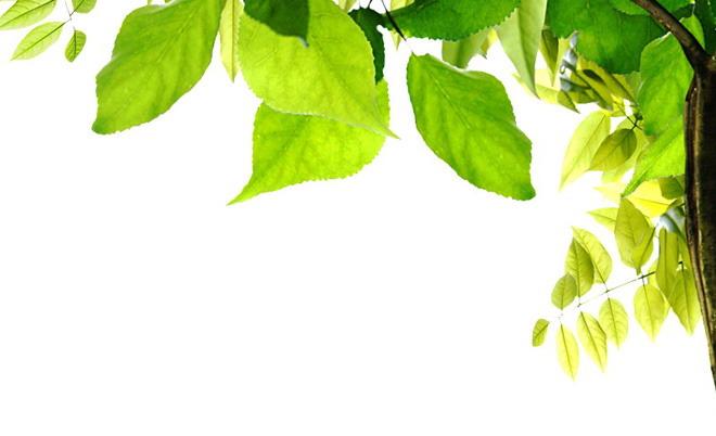 张角落绿色叶子PPT背景图片,第一PPT模板网提供幻灯片背景图片